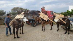 Τοποθέτηση νέων πινακίδων στο δίκτυο μονοπατιών της Κέας
