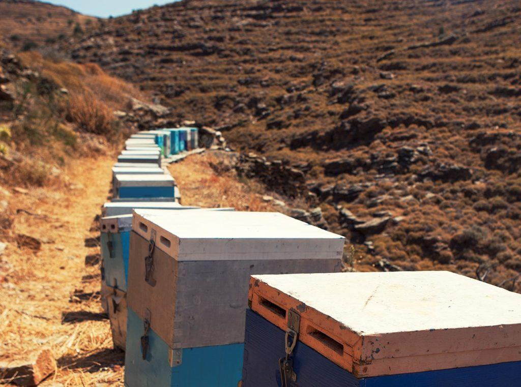 Ενημερωτικές εσπερίδες για τη Μελισσοκομία στην Κέα