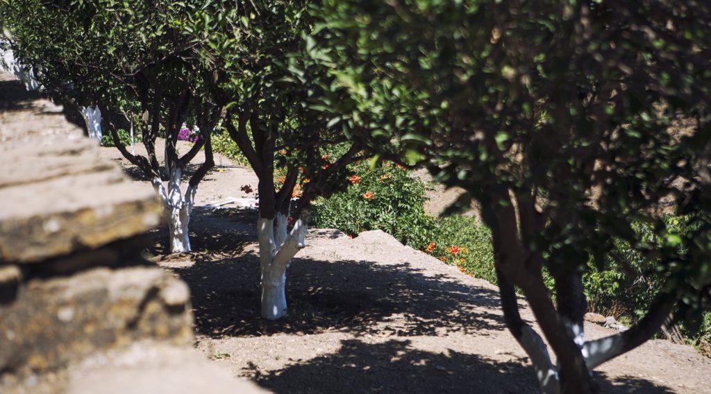«Ανάπτυξη μικρών γεωργικών εκμεταλλεύσεων»