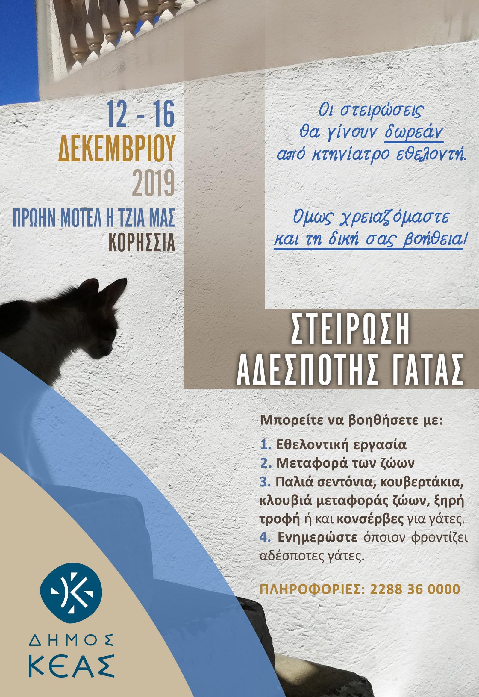Στείρωση Αδέσποτης Γάτας